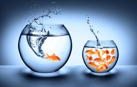 הנחל שזורם בכיוון ההפוך – על תשובה וחֶבְרָה